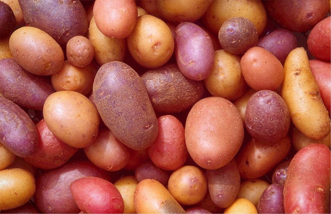 A brief history of the king of tubers: the potato | Romagnoli F lli Spa